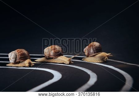 Three Snails Crawl Along The Treadmill To The Finish Line. Selective Focus. The Concept Of Developme
