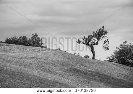 Beautiful Landscape With Lonely Tree And Green Pasture Fields And Cloudy Sky In The Bregonze Hills N
