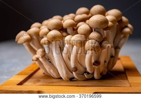 Fresh Buna Brown Shimeji Edible Mushrooms From Asia, Rich In Umami Tasting Compounds Such As Guanyli