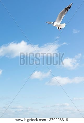 Beautiful Sea Gulls On A Background Of Blue Sky. Selective Focus.