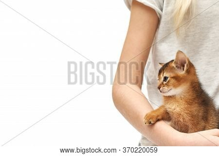 Croped Photo Of A Little Girl Stroking Her Little Ginger Kitten