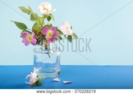 Wild Rose Flowers In A Glass Vase On A Blue Background
