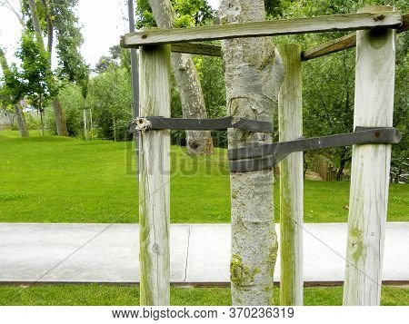 Tree Supports-young Trees Being Supported By Wooden Stakes. Trees With Three Stakes For Support. You
