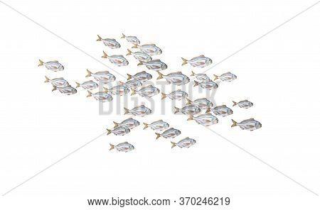 Dorado Fishes Isolated, Marine Life In Schools. Atlantic Ocean Fish Flock, Simple Water Inhabitants.