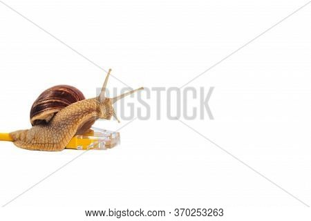 A Snail Crawls Along The Internet Wire. Concept Of Slow Data Transfer Speed, Web Loading.