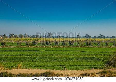 Egyptian cantryside near the Nile irrigation canal . Green landscape,  palm trees and residential buildings in the Nile Valley. Egypt.