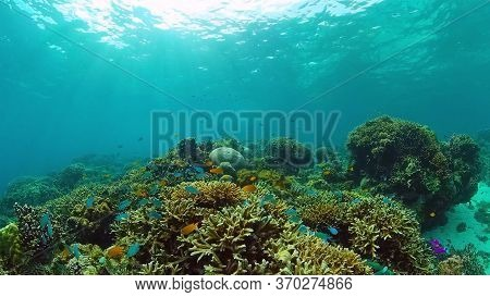 Beautiful Underwater Landscape With Tropical Fishes And Corals. Life Coral Reef. Panglao, Bohol, Phi
