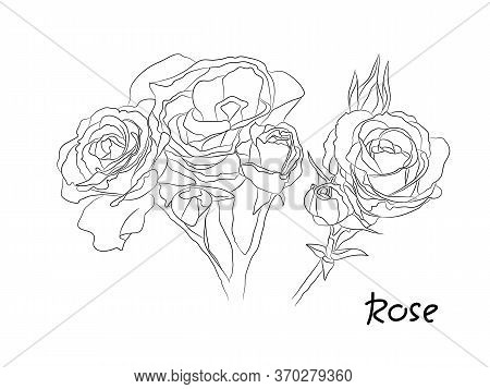 Black And White Floral Vector Set. Isolated Hand Drawn Black Contours Of Rose Flowers On White Backg