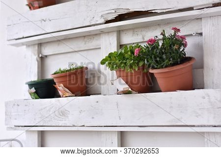 Young Plants Seedlings Are Planted In A Row In The Balcony Pots, Close-up. Life Style/ Gardening At
