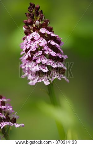 Beautiful Orchid Flower In Garden. Orchid Garden. Orchid Background. Colorful Orchid. Orchid In Natu