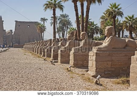 Ancient Egyptian Avenue Of Sphinxes On At Entrance Road To Temple Of Luxor With Pylon In Background