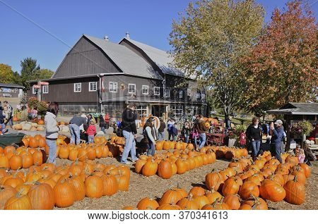 Milton, Ontario / Canada - 10/19/2008: Pumpkins Ready For Sale In A Farm Market, Milton, Ontario, Ca