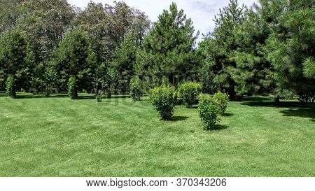 Well Maintained Garden Landscape With Meadow Green Grass And Pine Trees In Green Spaces, Sunny Summe