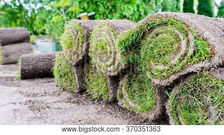 Grass Rolls Prepared For Laying In The Garden - Laying Lawn From A Roll - Sod For New Lawn