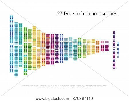 Chromosomes Pairs. Structure Of Dna Genome Sequence Map. 23 Human Pairs Of Chromosomes Illustration.