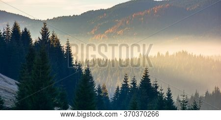 Forest Landscape In Mist. Mountain Behind The Glowing Atmosphere. Fir Trees Silhouettes On The Hills