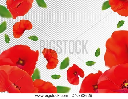 3d Realistic Red Poppies With Green Leaf. Red Poppies Flower In Motion. Wild Red Poppies Background.