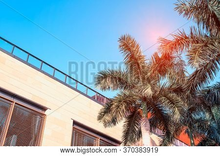 buildings on a blue sky with palm tree