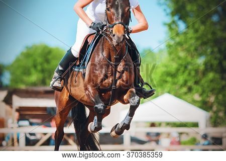 A Bay Racehorse With A Rider In The Saddle Jumps High At A Show Jumping Competition On A Sunny Summe