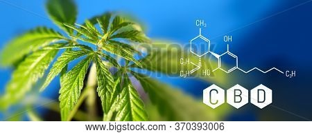 Cannabis Image Of Cbd Formula On Blue Background. Medical Cannabis Concept, Cbd Cannabidiol Formula.