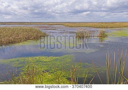 Calm Day On The Wolfweed Wetland Marsh In The San Bernard Wildlife Refuge In Texas