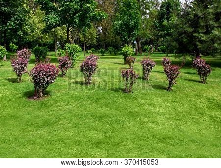 Well Maintained Landscape Garden Backyard With Shrub Bushes And Trees Green Spaces, Sunny Summer Gre
