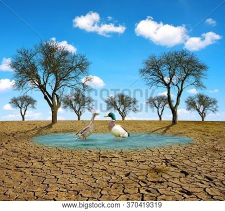 Two ducks in a drying lake with cracked earth. Global warming and change of climate concept. Environmental problem caused by drought.