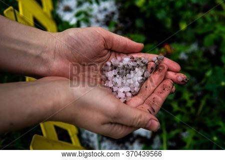 Round Pieces Of White Hail In A Handful Over A Flowerbed. Ice Floes Covered The Ground After Hailsto