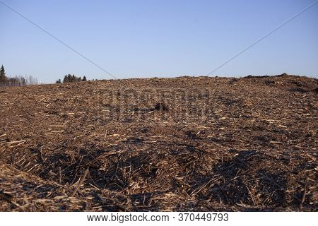 Deforestation. A Field Without Trees. Destruction Of Ecology. The Destruction Of Ecosystems. Sawn Fo