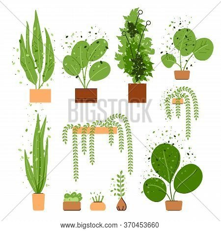 Vector Flat Interior House And Office Plant Set. House And Office Trees And Plants Collection Isolat