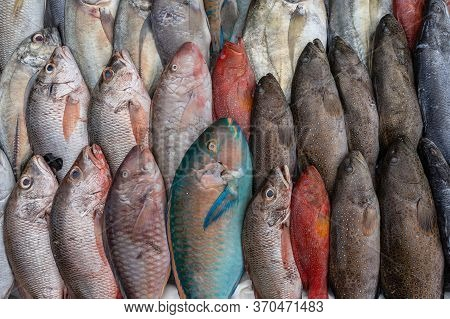 Fresh Sea Fish For Sell At The Street Food Market In Kota Kinabalu, Borneo, Malaysia, Close Up Seafo
