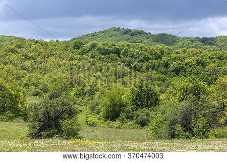 Spring Landscape Of Cherna Gora (monte Negro) Mountain, Pernik Region, Bulgaria