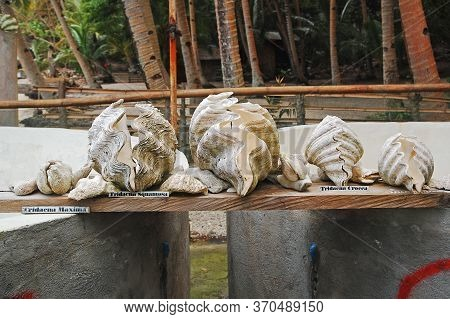 Camiguin, Ph - Feb 4 - Different Clam Species At Giant Clams Ocean Nursery On February 4, 2013 In Ca