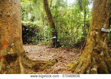 Camiguin, Ph - Feb 4 - Mantigue Island Nature Park Kolis Tree On February 4, 2013 In Camiguin, Phili