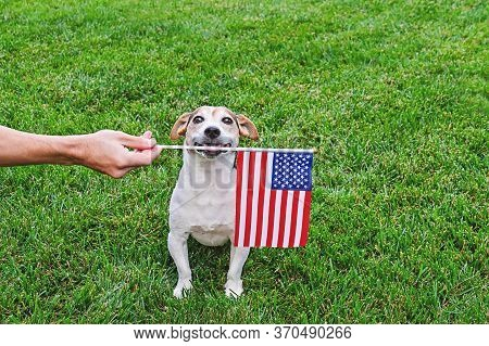 Portrait Of Proud Dog And Hand Holding American Flag On Green Background. Celebration Of Independenc