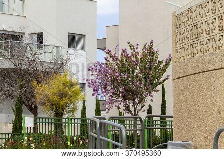 Covid-19. Empty Flowering City Streets. Israel Coronovirus.