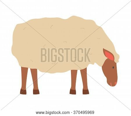 Farming Vector, Sheep Isolated Lamb With Wool Flat Style Character, Cute Fluffy Animal On Farm Stand