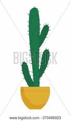 Evergreen Plant With Prickly Thorns In Yellow Pot. Cactus That Grown Indoor In Potting Soil. Object