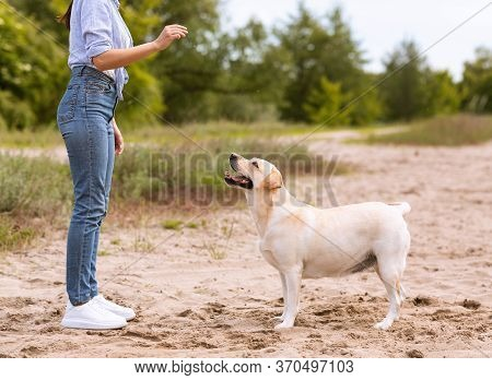 Training Process Concept. Unrecognizable Woman Giving A Command To Her Obedient Dog