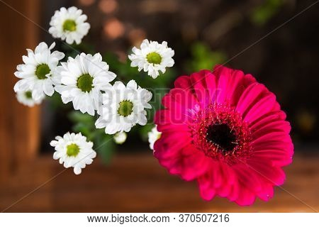 Pink Barberton Daisy Gerbera With White Marguerite Daisy In A Flower Pot
