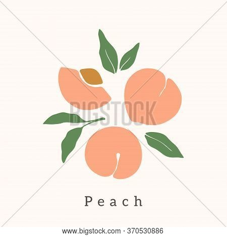 Stylish Peach Vector Design. Contemporary Art Print. Abstract Hand Drawn Peach Fruit And Leaves For
