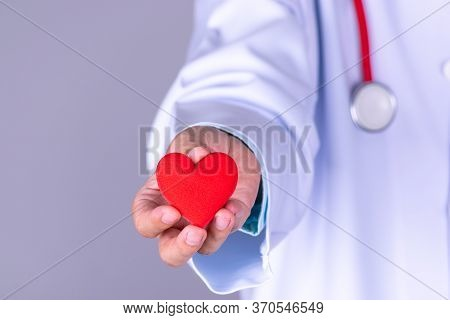 Cardiologist Doctor Holding Red Heart In Hospital. Cardiology Health Care Service, World Heart Day C