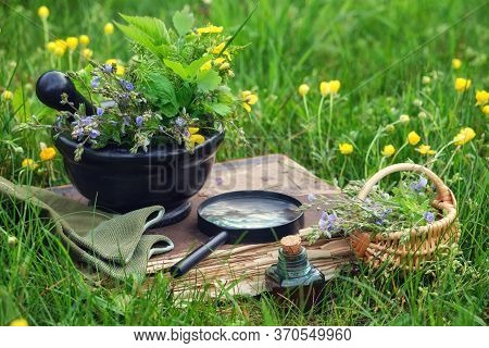 Mortar Of Medicinal Herbs, Old Book, Infusion Bottle, Basket And Magnifying Glass On A Grass On Mead