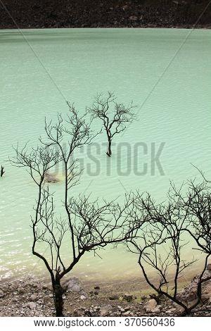Dead Trees At Kawah Putih Volcano Lake, Close To Bandung, Indonesia. It Is A Sulfuric Lake Set In Vo