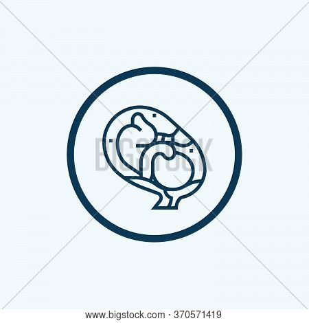 Fetus Icon Isolated On White Background From Family Collection. Fetus Icon Trendy And Modern Fetus S