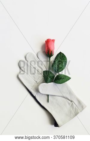 Beautiful Artificial Red Rose Is Held By The Thumb Of A Lying Leather Glove. Close-up On A White Bac