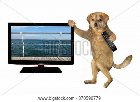 The Beige Dog With A Tv Remote Control In Its Paw Is Standing Near The Television Set. White Backgro