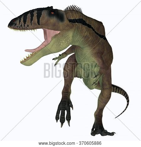 Carcharodontosaurus Carnivore Dinosaur 3d Illustration - Carcharodontosaurus Was A Predatory Theropo