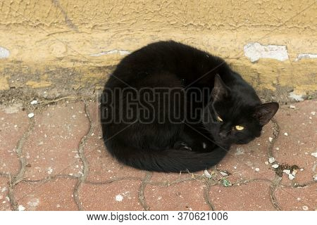 An Unfortunate Homeless Black Cat Lies, Bask In The Sun, Curled Up And Squints.