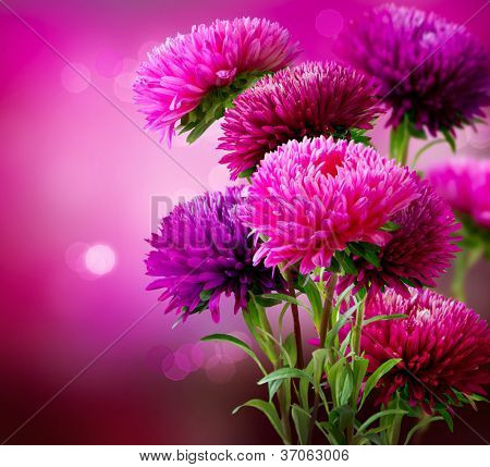 Aster Autumn Flowers Art Design